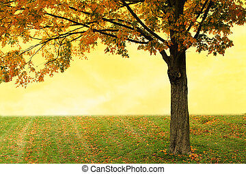 Maple tree against yellow sunset autumn sky