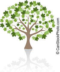 Maple tree Vector Illustration.