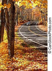 MAPLE TREES - Scenic drive through Maple trees in Michigan