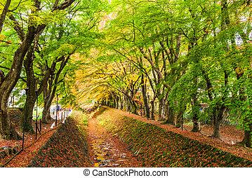Maple Tunnel in Japan - Maple Corridor near Kawaguchi Lake, ...