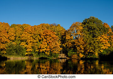 Maple yellow-red forest on the shore of the pond