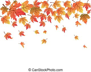 maples background with copy space