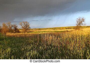marécageux, mai, ensoleillé, day., vallée rivière
