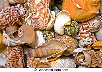 mar, colección, conchas