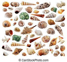mar-conchas