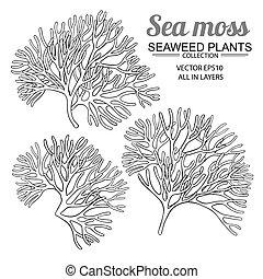 mar, conjunto, musgo