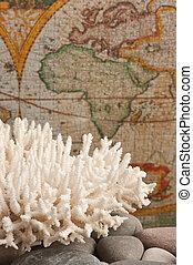 mar, coral