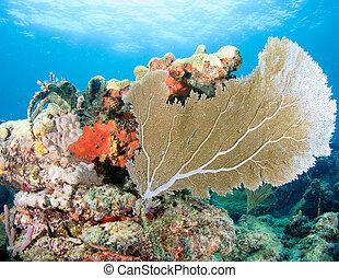 mar, coral, grande, ledge., ventilador, arrecife,...
