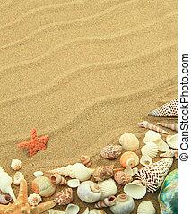 mar de la arena, conchas