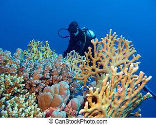 mar, fondo, coral, tropical, arrecife, niña, buzo