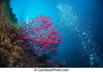 mar, hermoso, colores