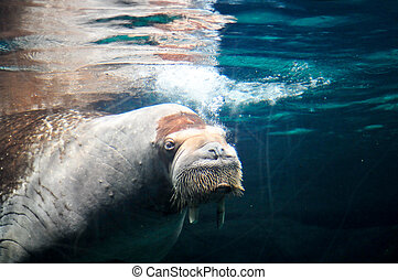 mar, mamífero, el nadar bajo el agua