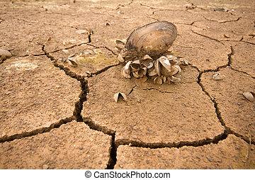 mar, sequía, cambio, de, clima, calor, agua