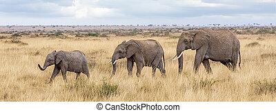 mara, trois, éléphants, masai