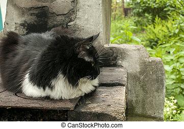 maradék, macska, udvar, falu
