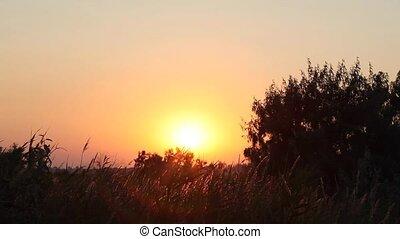 marais, coucher soleil