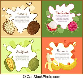 Marang and Rambutan Jackfruit Vector Illustration - Marang...