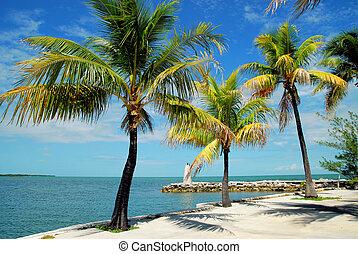 Marathon Palm