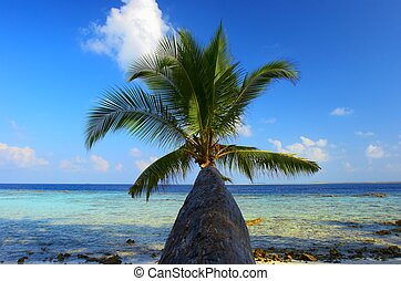maravilhoso, praia, com, árvore palma