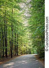 maravilhoso, primavera, em, a, floresta verde, polônia