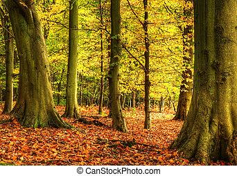 maravilloso, colorido, vibrante, otoño, otoño, bosque, paisaje