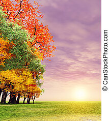 maravilloso, otoño, ocaso