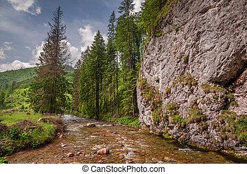 maravilloso, pequeño, corriente, en, koscieliska, valle, en, tatra, montañas
