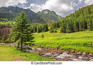 maravilloso, pequeño, corriente, en, koscieliska, valle, tatra, montañas