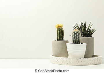 Marble tray with succulent plants on white background. Houseplants