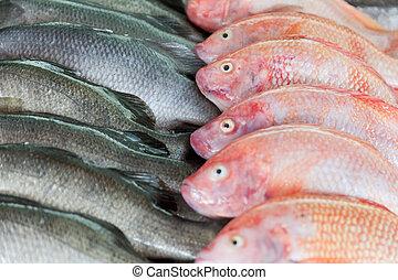 marché, fish, compteur, fresh-caught, mer