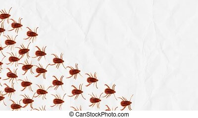 March of parasites - a group of red ticks moves forward