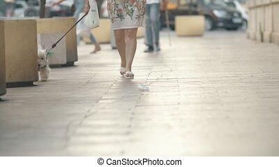 marche, agréable, gens, ouest, rue, blanc, région montagneuse, terrier