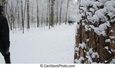 marche, arbres hiver, parc, neige, park., couvert, homme
