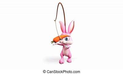 marche, carotte, lapin