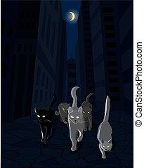 marche, chat, sombre, bande rue, long, mafia
