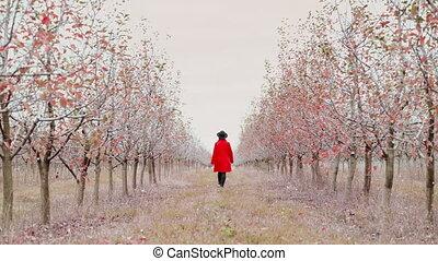 marche, concept, season., pomme, devant, nature, manteau,...