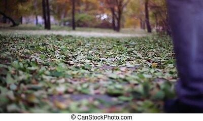 marche, délassant, automne, park., 1920x1080, homme