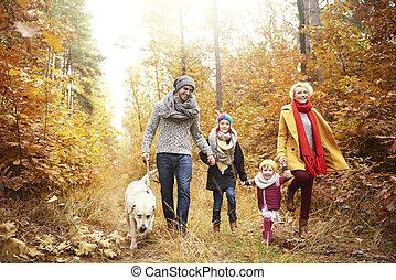 marche, famille, gens, chien, quatre, forêt