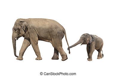 marche, famille, -, maman, éléphant, bébé