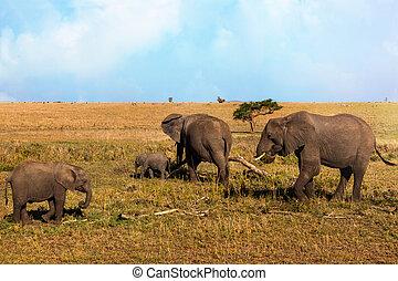 marche, famille, national, éléphant, park., serengeti, africaine, savane