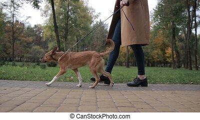 marche, femme, parc, chien, bas, anonyme, vue