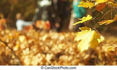 marche, gens, effect., arbres., flétri, jaune, brouillé, paysage automne, prise vue., foyer., arrière-plan., bokeh, forêt, voyante, bokeh., sélectif, gosses, doux, multicolore, feuillage, path.