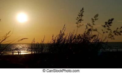 marche, groupe, gens, plage coucher soleil, sablonneux