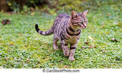 marche, herbe, chat vert