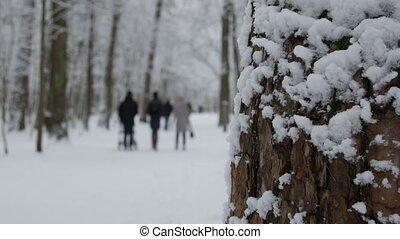 marche, hiver, famille, arbres, parc, neige, park., couvert, enfants