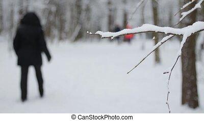 marche, hiver, gens, arbres, parc, neige, park., couvert