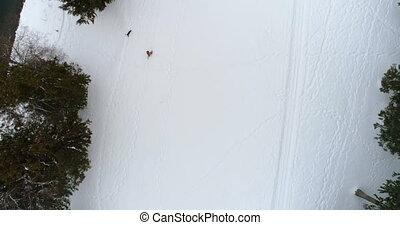 marche, neigeux, forêt, homme, 4k, chien