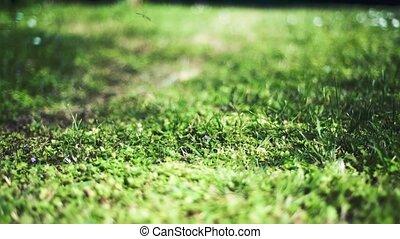 marche, niveau, ensoleillé, herbe, jour, mouvement, lent