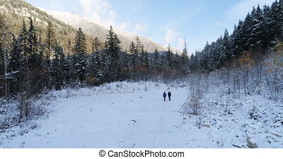 marche, par, montagnes, ariel, forêt, pin, touriste, 4k