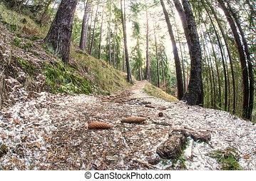 marche, piste, dans, forêt